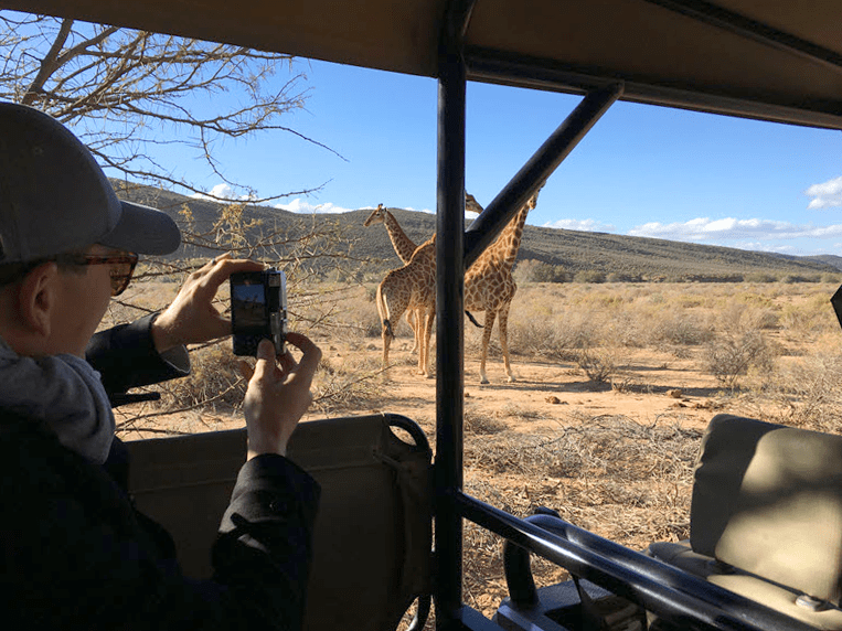 Giraffe at sanbona
