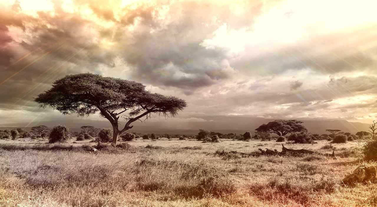 SA landscape